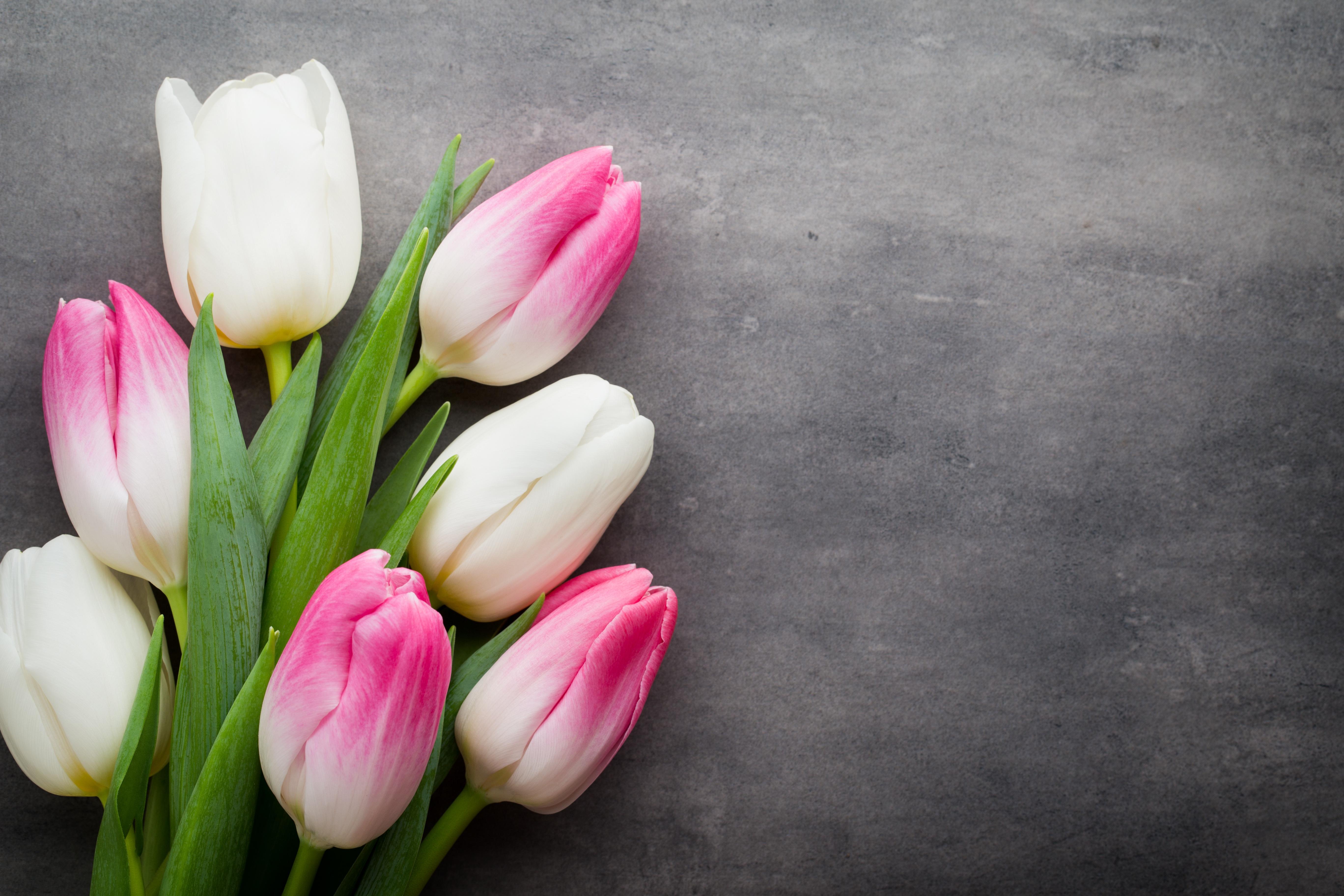 Тему, картинки цветы тюльпаны на рабочий стол