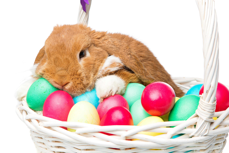 Пасхальные картинки с кроликом