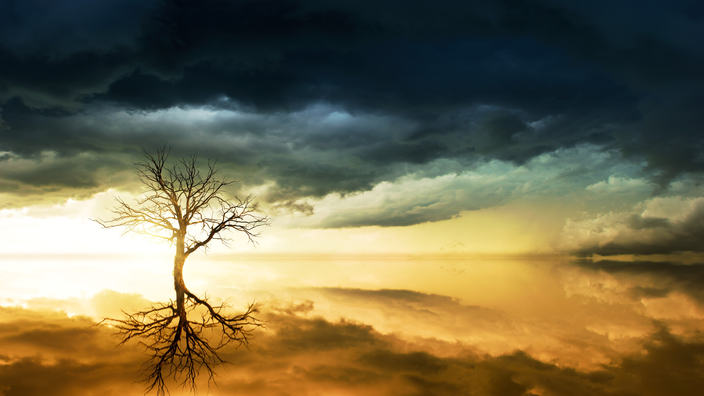 небо, вода, деревья  № 2487098 без смс