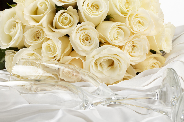 Открытки, красивые цветы картинки розы белые