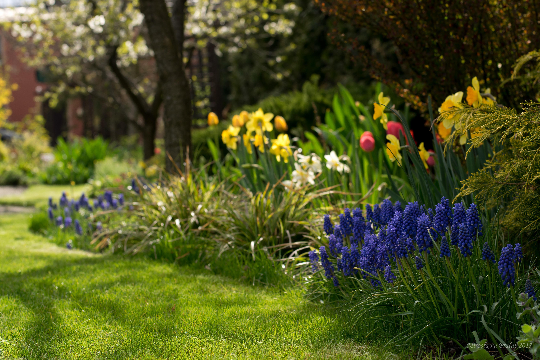цветник весной фото этой статье попробуем