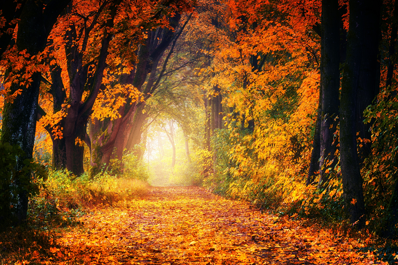 картинки золотая осень в высоком разрешении увеличить