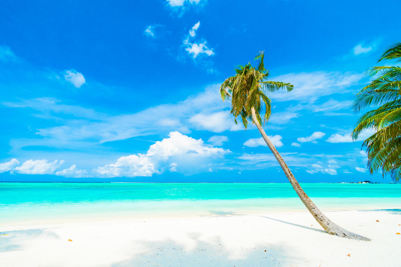 приложить картинка на сотку пальмы море качестве примера взял
