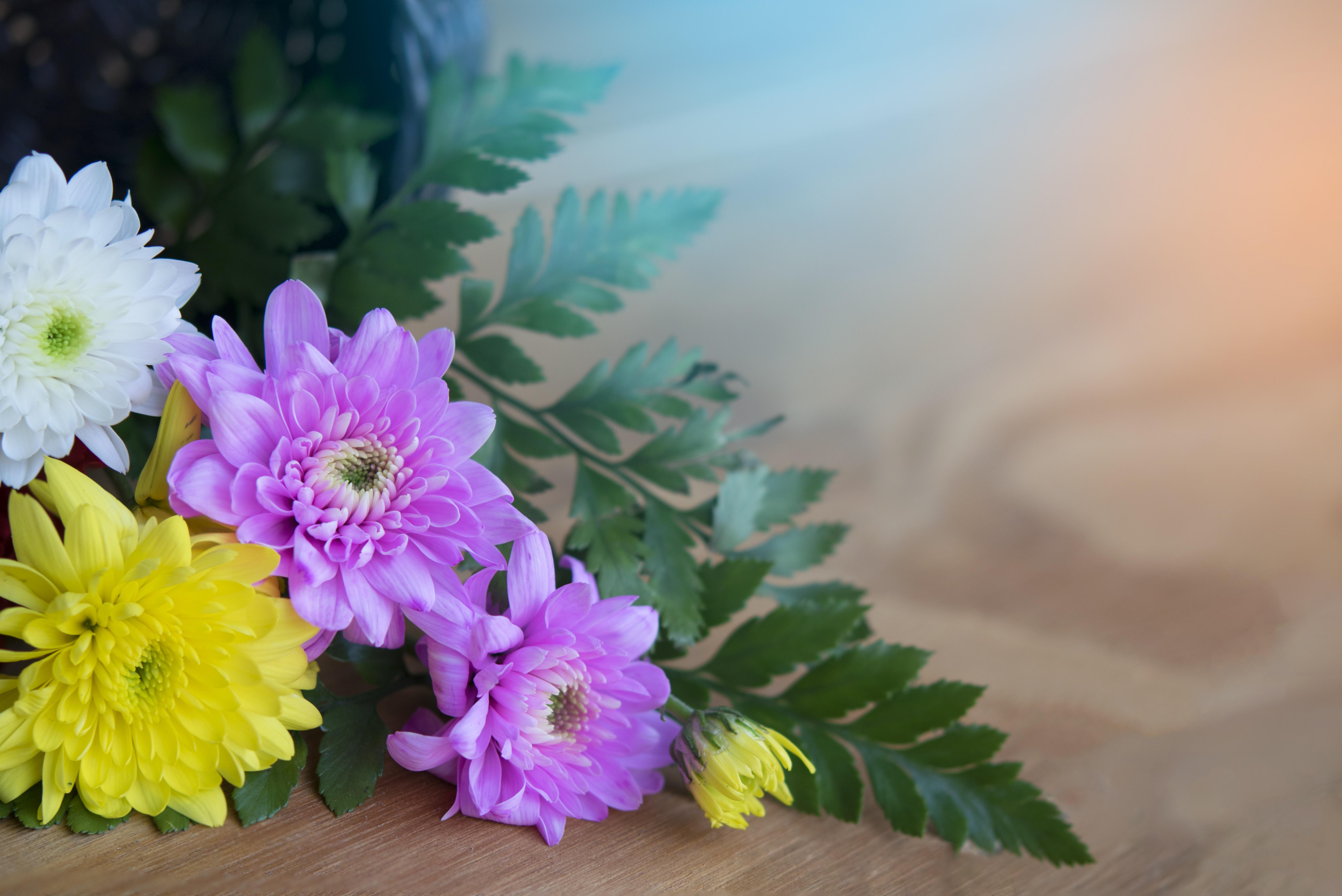 Картинка с хризантемами для открытки