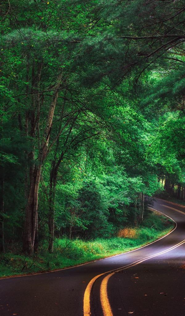 Дорога в лесу вертикальные картинки