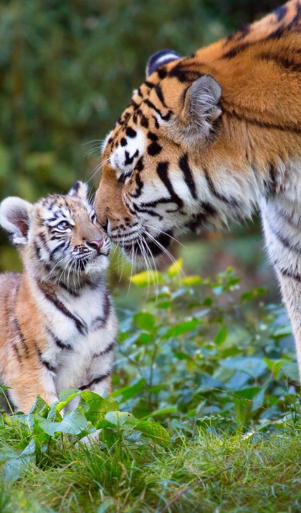 Спокойной ночи, тигрята картинки с надписями