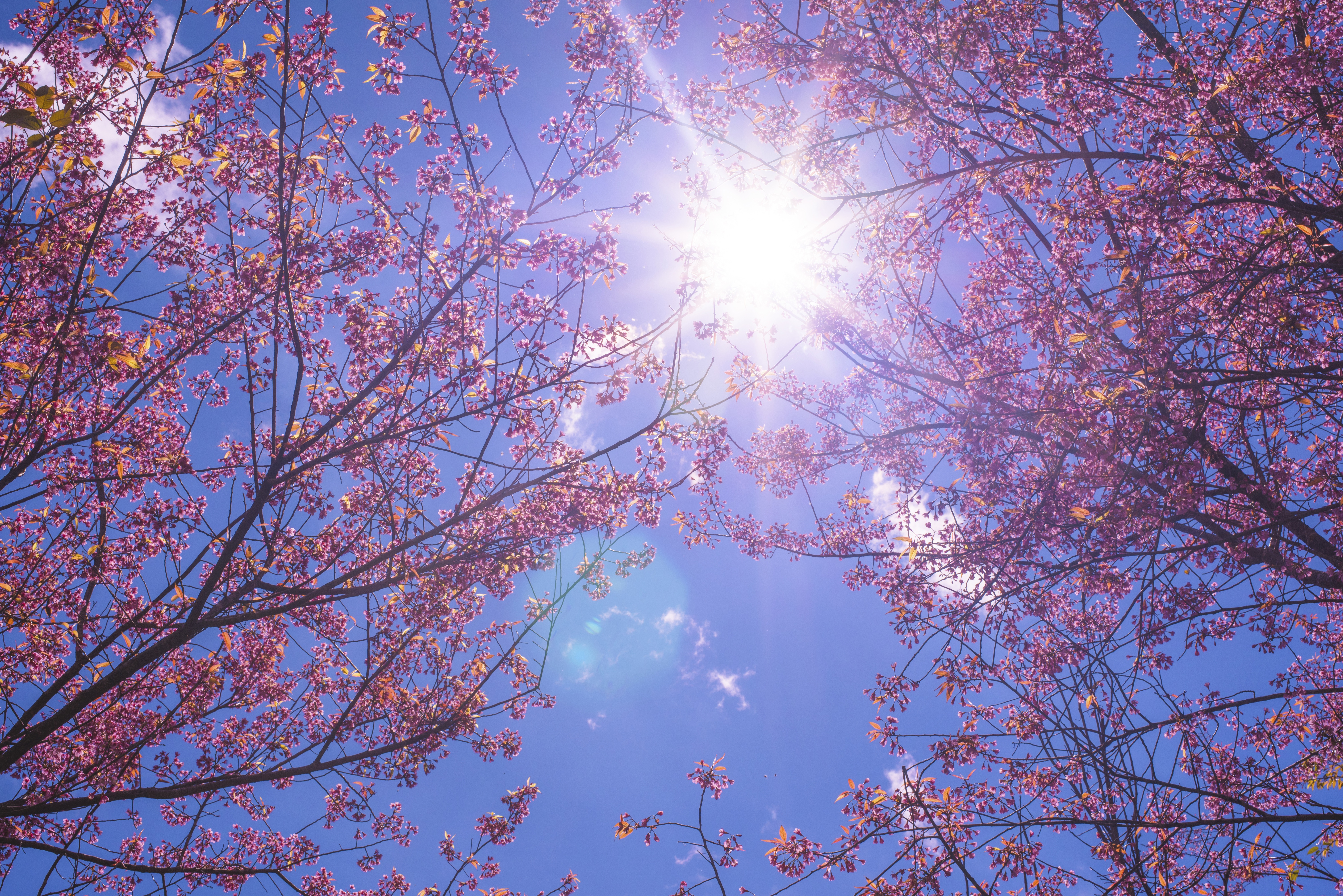 картинки красивое весеннее небо девушка стоит босыми