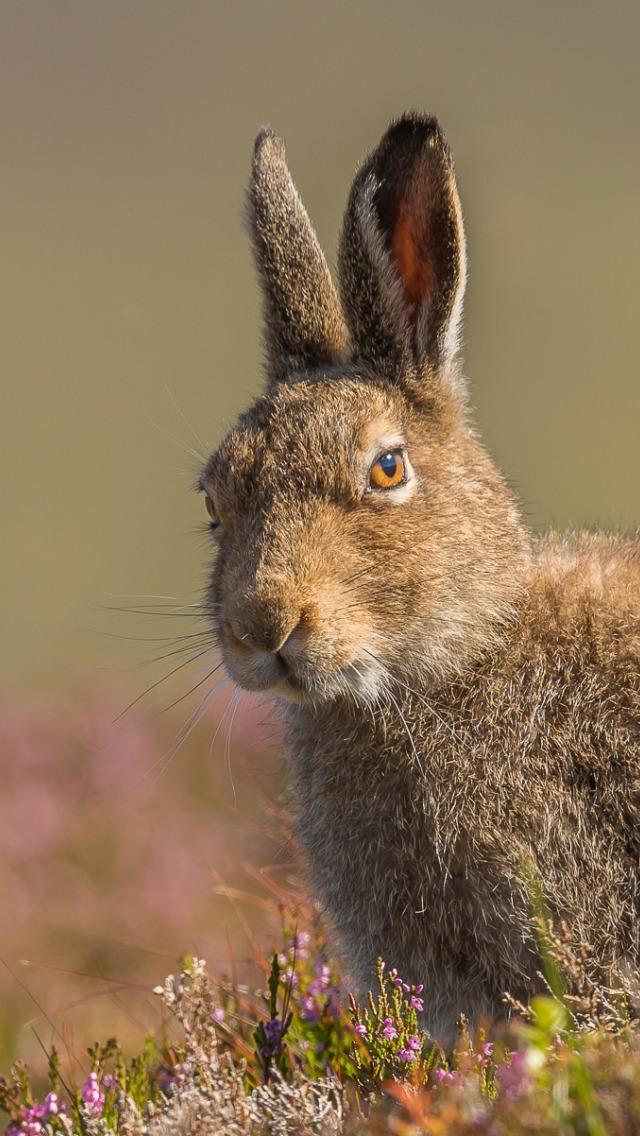 своего ромочку зайцы весной картинки ведь