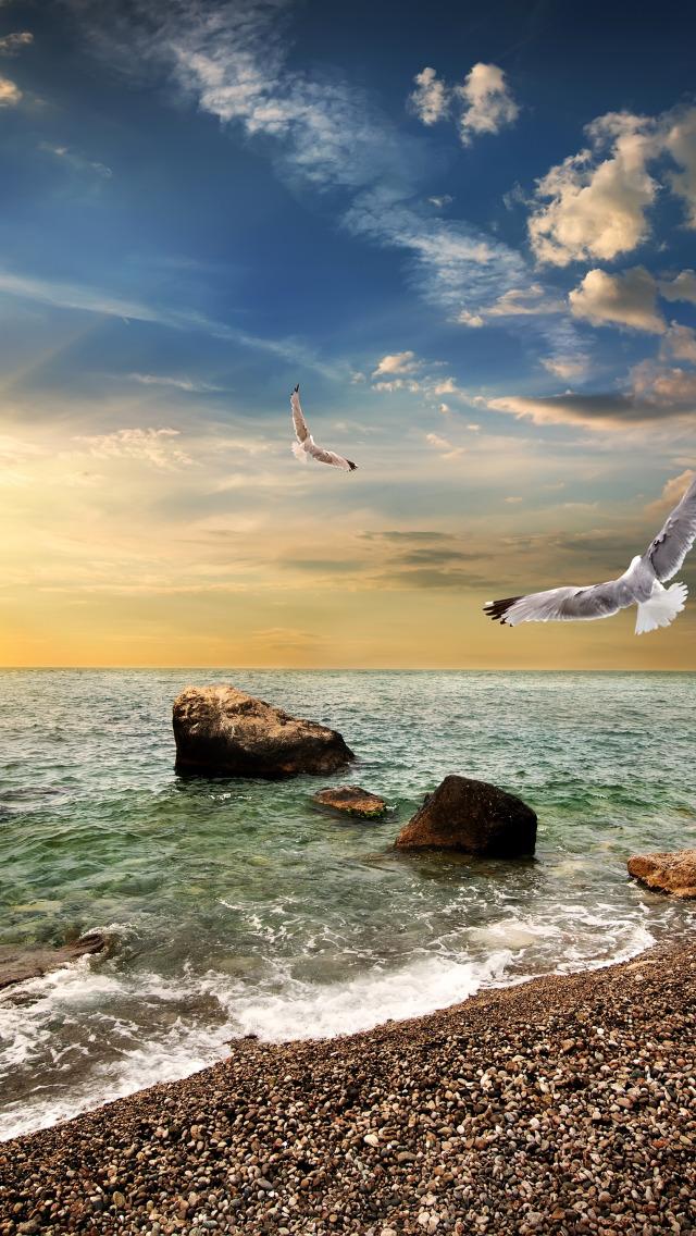 картинки море чайки вертикальные выросшая северных районах