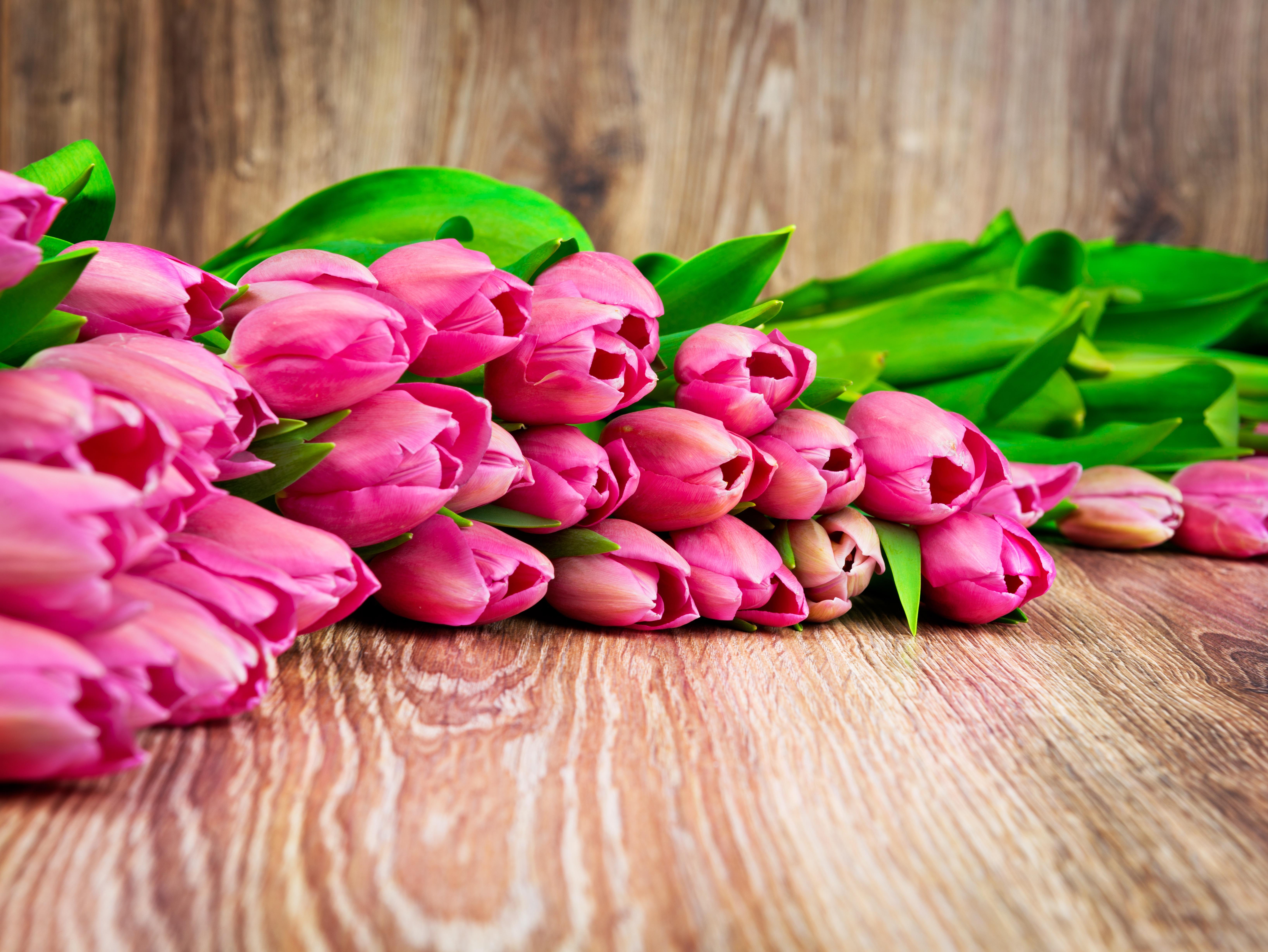 Тюльпаны картинки на рабочий стол