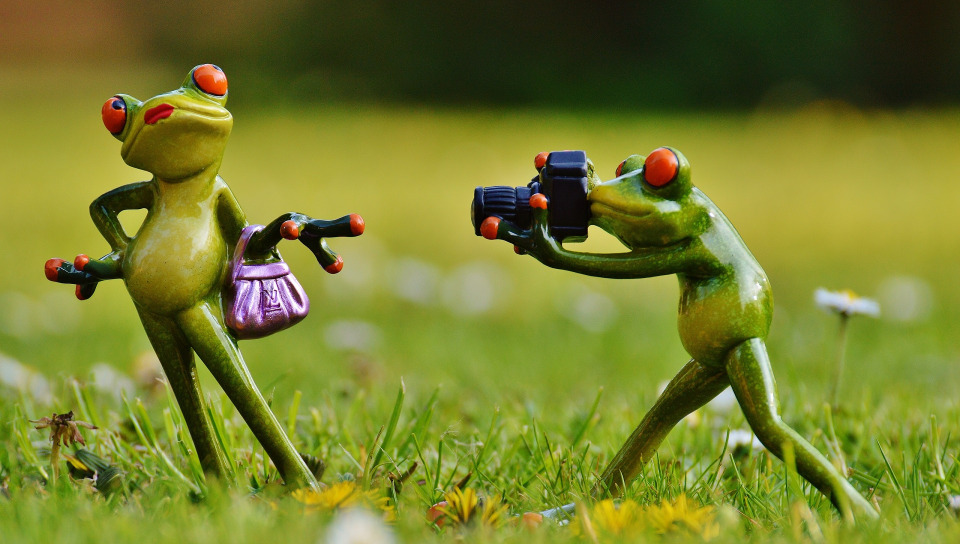 лягушка путешественница фото картинки