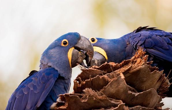 Картинка птицы, природа, пень, попугаи, ара