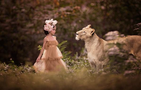 Картинка природа, животное, хищник, платье, девочка, наряд, львица