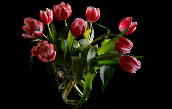 Картинка листья, цветы, букет, тюльпаны, ваза, черный фон, бутоны