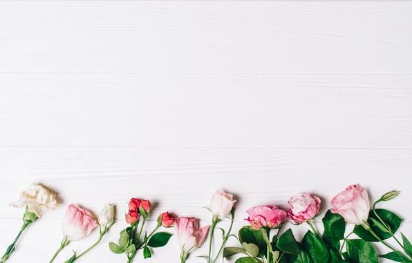 Картинка фон, розы, Цветы, бутоны