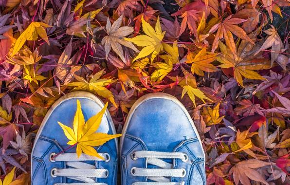 Картинка осень, листья, кеды, шнурки