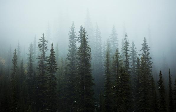 Картинка снег, деревья, природа, туман