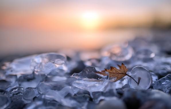 Картинка природа, лист, лёд