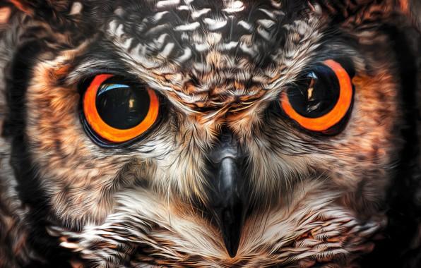 Картинка взгляд, сова, птица, клюв, глазища