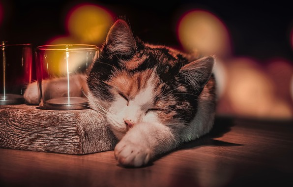 Обои кошка, уют, дом