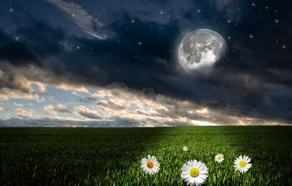 Картинка зелень, поле, небо, трава, облака, цветы, ночь, луна, фотошоп, ромашки, звёзды, горизонт, фэнтези, день