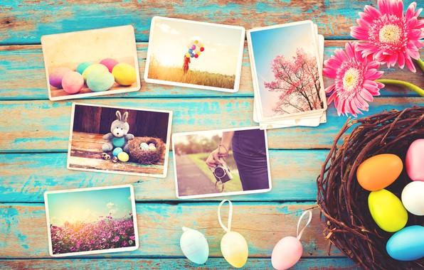 Картинка цветы, фото, яйца, весна, камера, colorful, Пасха, герберы, wood, pink, flowers, camera, spring, Easter, eggs, …