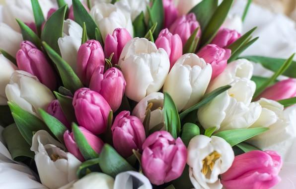 Картинка букет, тюльпаны, разноцветный