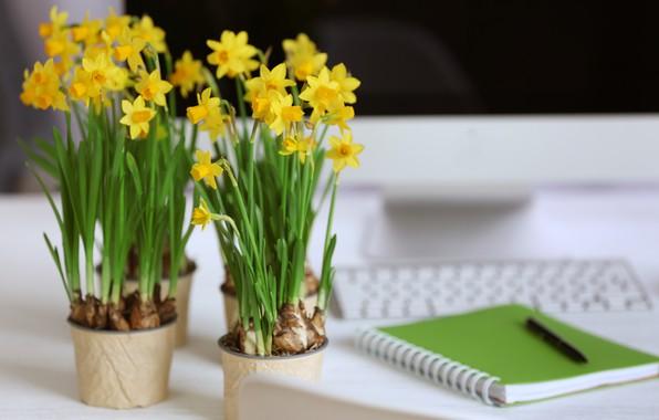 Картинка цветы, желтые, ручка, блокнот, нарциссы