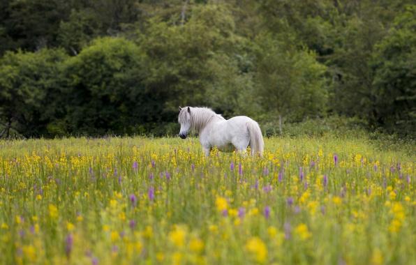 Картинка цветы, конь, лошадь, луг