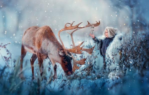 Картинка зима, снег, радость, природа, животное, мальчик, олень, колокольчики, ребёнок