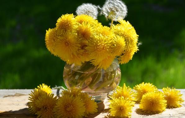 Картинка лето, макро, цветы, фото, одуванчик, растения, сад, натюрморт, россия, одуванчики, этюд