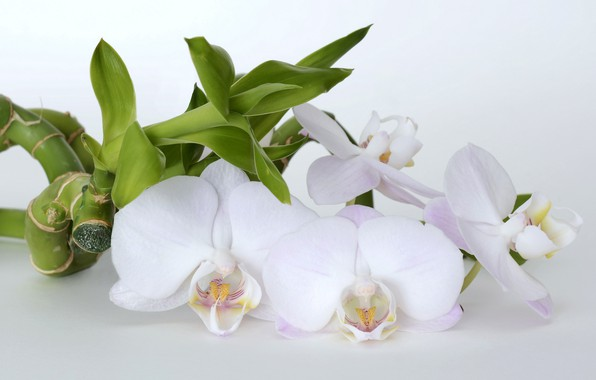 Картинка цветы, бамбук, орхидеи