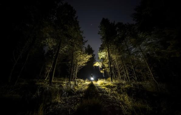 Картинка лес, свет, ночь, человек