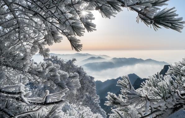 Картинка зима, иней, горы, ветки, China, Китай, сосны, Huangshan Mountains, Горы Хуаншань