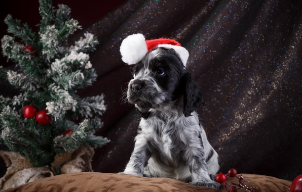 Картинка шапка, елка, щенок, спаниель