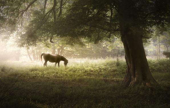 Картинка природа, туман, дерево, конь