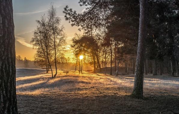 Картинка лес, свет, туман