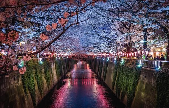 Фото обои свет, цветы, ночь, город, огни, люди, весна, Япония, сакура, канал