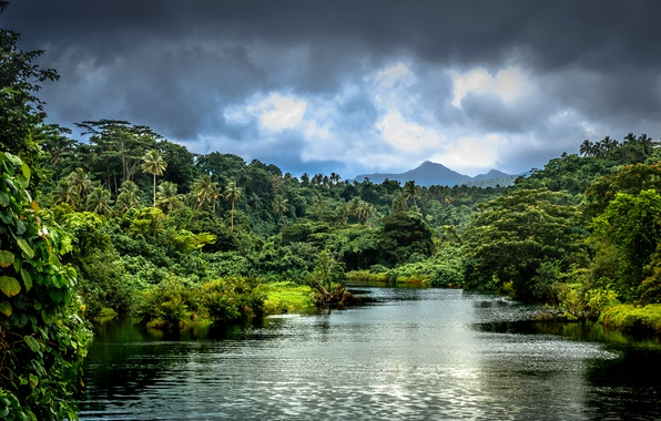 Картинка зелень, лес, облака, деревья, горы, тропики, река, пальмы, джунгли, кусты, Samoa