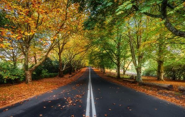 Картинка дорога, пейзаж, природа, красота