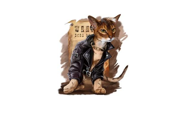 Картинка кот, стиль, куртка