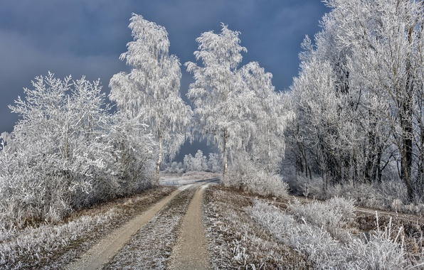 Картинка зима, иней, дорога, берёзы