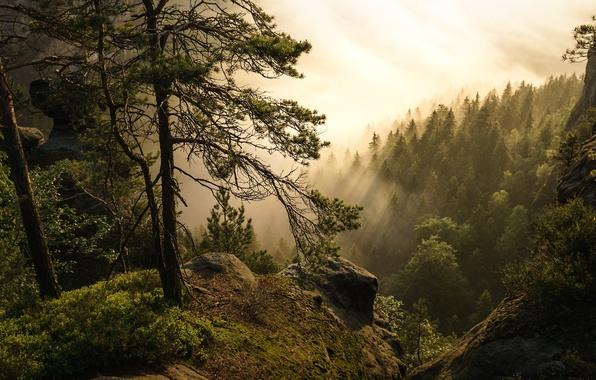 Картинка лес, деревья, туман, Германия, Germany, Саксонская Швейцария, Saxon Switzerland, Эльбские Песчаниковые горы, Elbe Sandstone Mountains