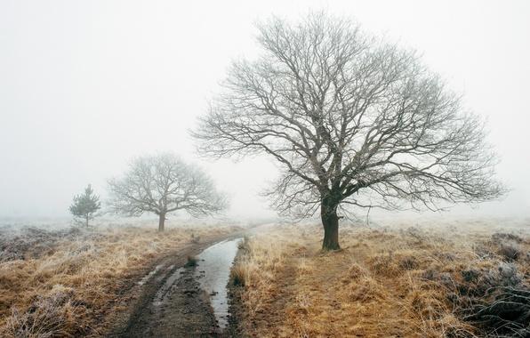 Картинка дорога, поле, туман, дерево