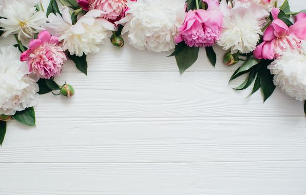 Картинка цветы, розовые, white, белые, бутоны, wood, pink, flowers, пионы, peonies