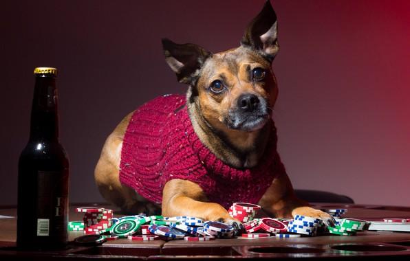 Картинка бутылка, собака, фишки, свитер, игрок