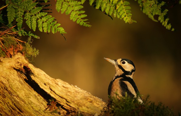 Картинка природа, дерево, птица, папоротник