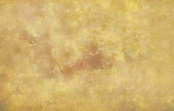 Картинка ретро, фон, бежевый, обои рабочий стол, декоративный, художественный, сбор винограда