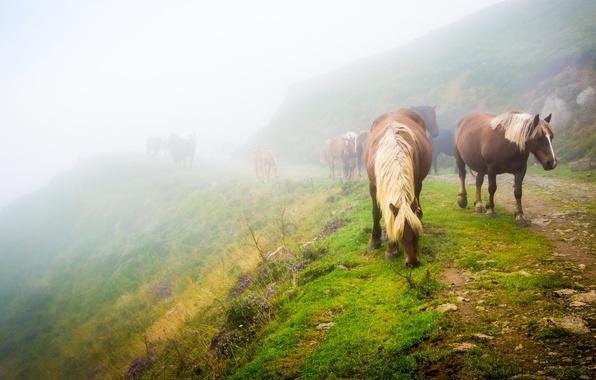 К чему снится лошадь Сонник  лошадь во сне Толкование