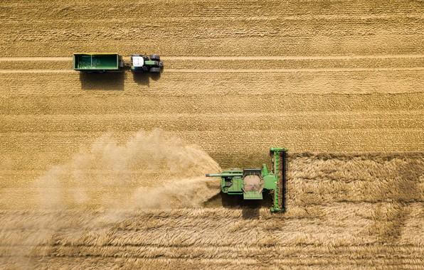 Картинка поле, урожай, уборка, трактор, прицеп, комбайн